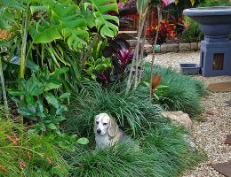 Cairns Dog Friendly Garden Landscaping