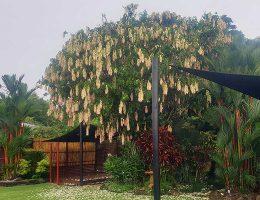 Garden Landscaping Cairns